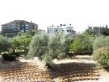 El Olivar de Castillejo: An Oasis inMadrid