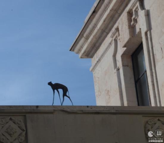CityWinks Madrid - Casa de Velazquez 3